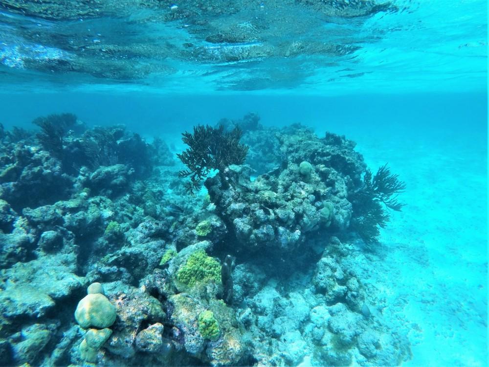 Jachthuur in Martinique - Lagoon Lagoon 400 via SamBoat